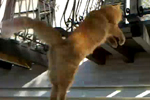 superkitty Superkitty   Cat makes seemingly gravity