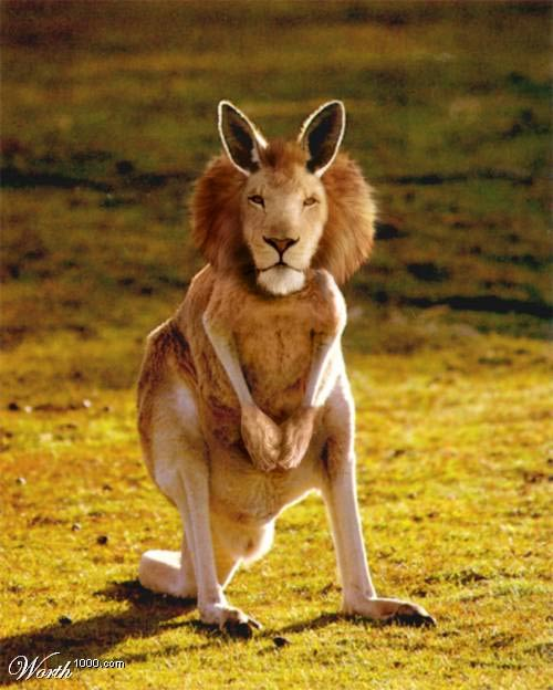 photoshop animals 14 Photo Shop Wonders