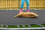 Trampoline Kitty Trampoline Kitty
