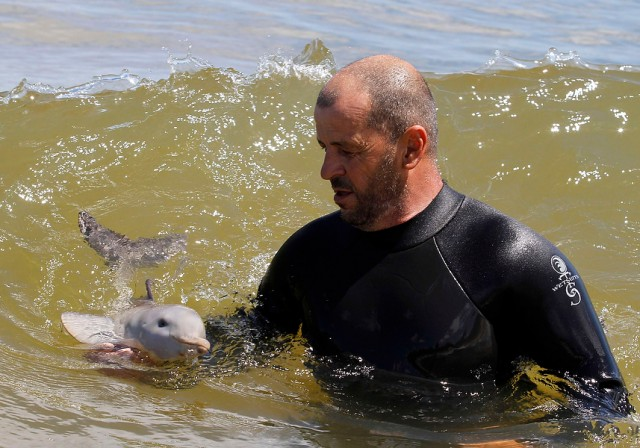 Dolphin Baby 640x448 Dolphin Baby
