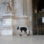 skateboarding dogs of Paris 150x150 Skateboarding dogs of Paris