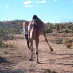 Nessi the Camel loves to run 150x150 Nessi the Camel loves to run
