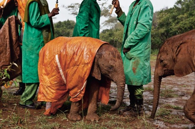 05 orphan elephant nichols 670 640x426 The Top 3 Photographs of 2011
